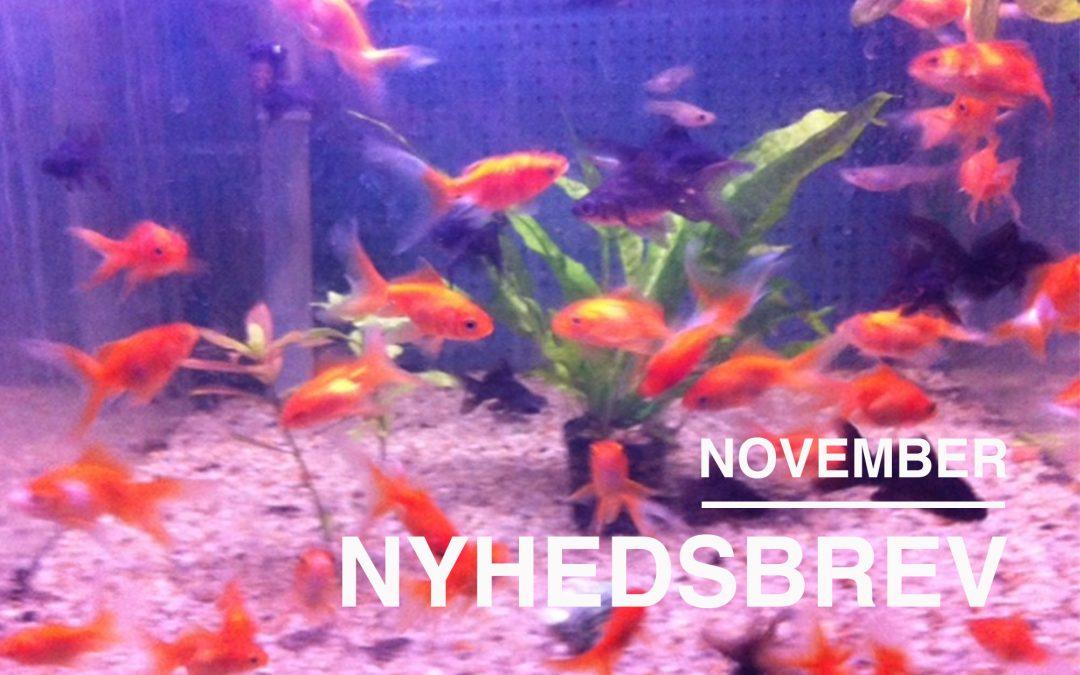 CAKIs Nyhedsbrev for november